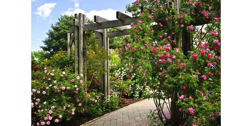 Важные правила для проектирования сада